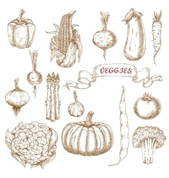 Farm egetables sketches from autumn harvest vector image vector image