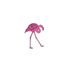 Pink flamingo bird vector