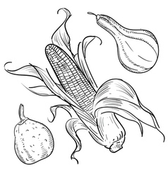 Corn sketch vector