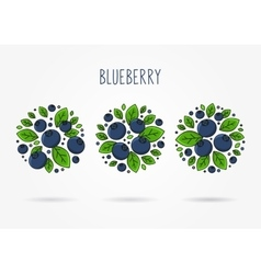 Blueberry round labels creative concept vector