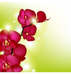 Pink Orchids With Blur vector image vector image