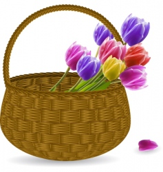 tulips in a wicker basket vector image