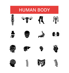 human body thin line icons linear vector image