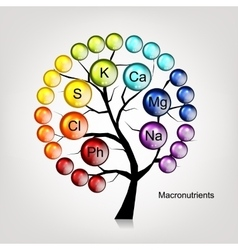 Vitamins tree concept for your design vector image vector image