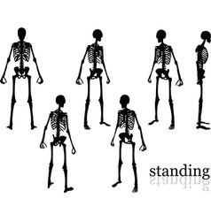 Skeleton silhouette in standing pose vector