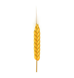 Dry wheat spikelet icon cartoon style vector