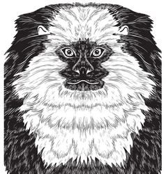 Monkey marmoset vector image vector image