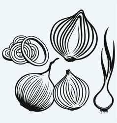 Red onion bulb and rings vector image