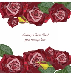 Watercolor dark red rose card vector