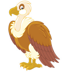 White-headed vulture vector