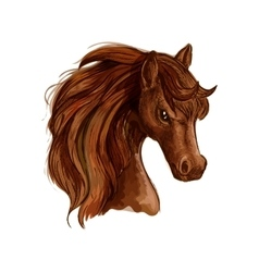 Brown arabian mare horse sketch for equine design vector