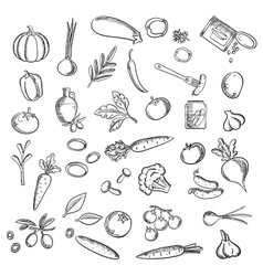 Natural ripe vegetables and herbs sketch icons vector