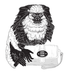 Glamorous fashion marmoset vector image vector image