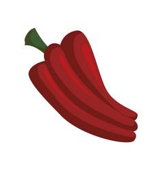 Red pepper vegetable vector