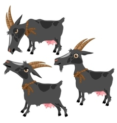 Gray spotted goat in three poses animal vector