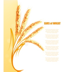 Yellow background with ears of wheat vector image vector image