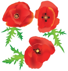 Three red poppies vector