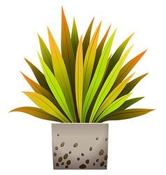A decorative plant vector image