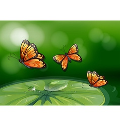 Butterflies and water lily vector