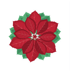 Christmas poinsettia flower vector