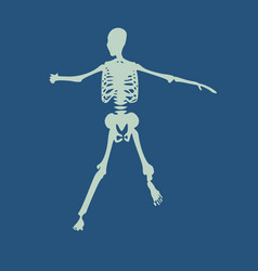 Halloween human skeleton vector