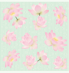 Seamless pattern with delicate lotus flowers vector