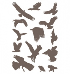 birds predator vector image