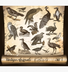 Vintage animals birds vector