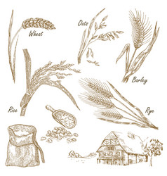 Wheat rye oats barley farm house in vintage vector