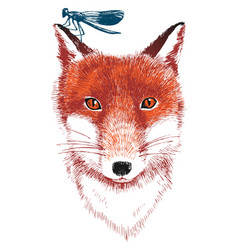 hand drawn fox and dragonfly vector image vector image