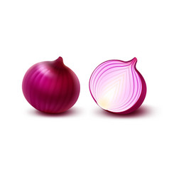 Set of fresh red onion bulbs on white background vector