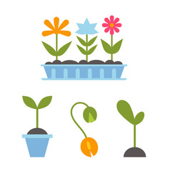 Spring plants in pots vector