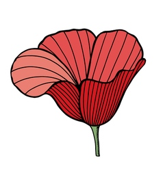 Flower of red poppy vector
