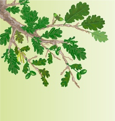 Oak branch with leaves and acorns vector image vector image
