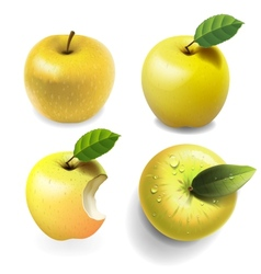 Set of yellow ripe Apples four various view vector image vector image