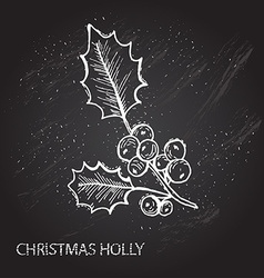 Hand drawn holly vector
