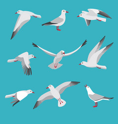 atlantic seagull in different action poses vector image vector image