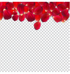 Naturalistic rose petals on transparent background vector
