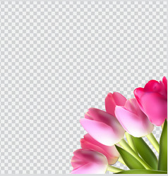 Beautiful pink realistic tulip on transparent vector