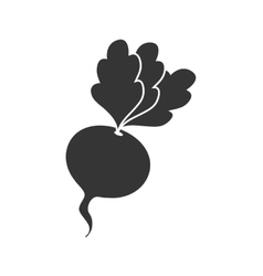 beet beetroot vegetable icon graphic vector image
