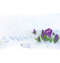 Spring snow flowers vector
