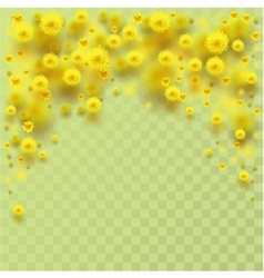 Yellow fluffy mimosa flowers fall vector