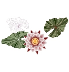 Pink lotus with contour green leaves vector