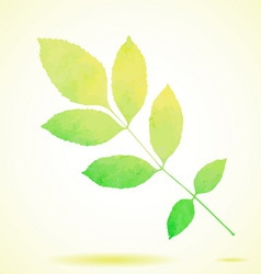 Green watercolor painted ash tree leaf vector