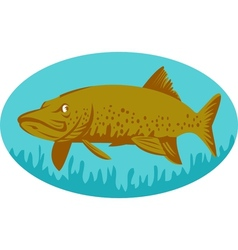 Pike or muskie fish swimming vector