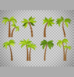 palm trees set on transparent background vector image