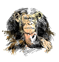 Colored Hand drawing Chimpanzee vector image vector image