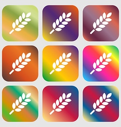 Wheat Ears Icon sign Nine buttons with bright vector image