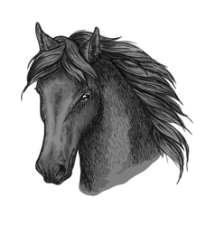 Horse head portrait with calm look vector