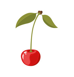 White background of realistic cherry with stem and vector